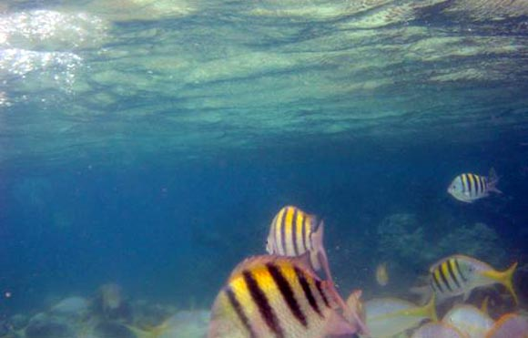 Άγιος Δομίνικος: Όσα δεν ξέρετε για το πιο... τηλεοπτικό νησί στην Ελλάδα (Photos)