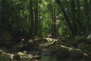 Ανακαλύφθηκε «παραδεισένια» ζούγκλα στη Μοζαμβίκη