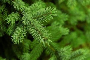 Ανακυκλώστε φέτος τα Χριστουγεννιάτικα δέντρα