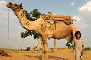 Η ωραιότερη καμήλα