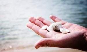 Η συλλογή κοχυλιών και το περιβαλλοντικό κόστος
