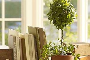 Στολίστε το σπίτι σας με φυτά εσωτερικού χώρου
