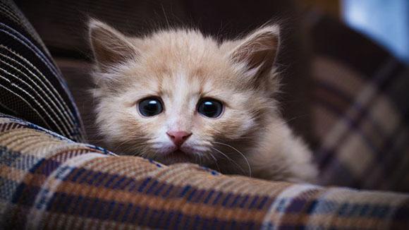 Στρέψτε την προσοχή σας, στην καταθλιπτική γατούλα