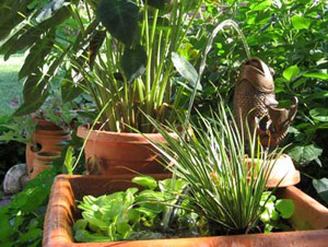 Συμβουλές για αρχάριους κηπουρούς!