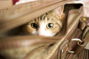 Τι να προσέχετε όταν ταξιδεύετε με το κατοικίδιό σας