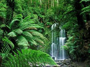 Τροπικά δάση: το οξυγόνο