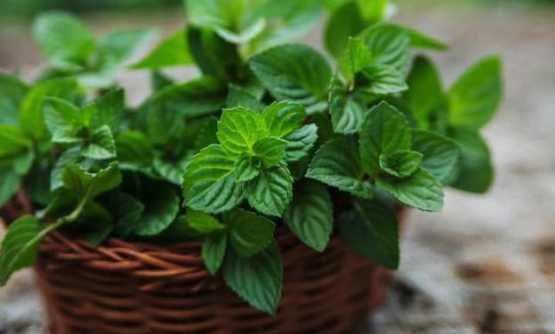 Τα 10 φυτά που προσελκύουν καλή τύχη και διώχνουν την αρνητική ενέργεια!