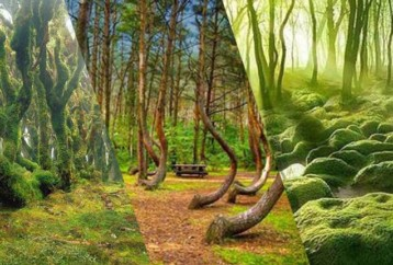 4 από τα πιο μυστηριώδη δάση του πλανήτη!