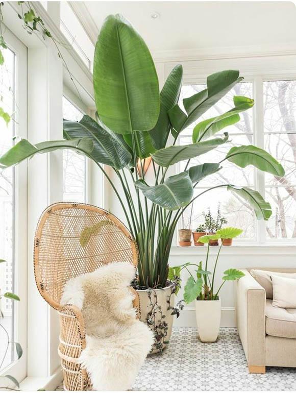 5 στυλάτα φυτά για να διακοσμήσετε το σπίτι σας