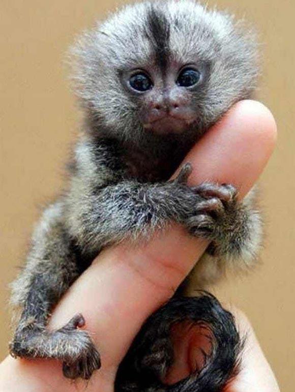 Αξιολάτρευτα μικροσκοπικά ζώα