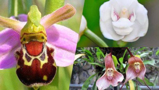 Απίστευτα λουλούδια που υπάρχουν στη φύση!