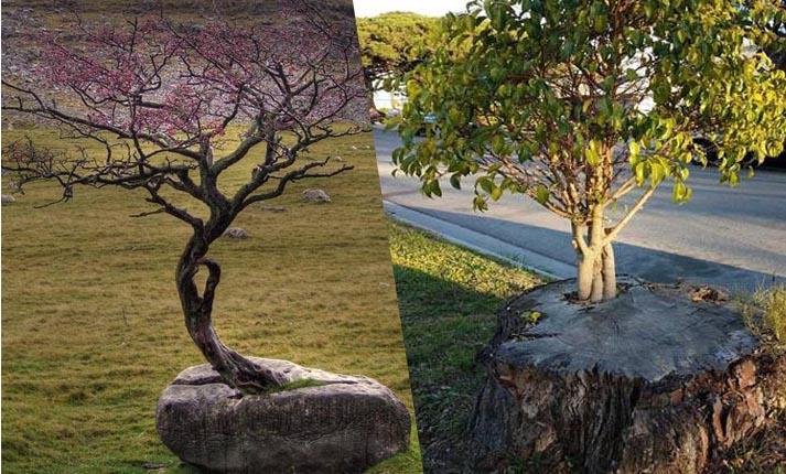 Δέντρα που αντιστάθηκαν στο θάνατο