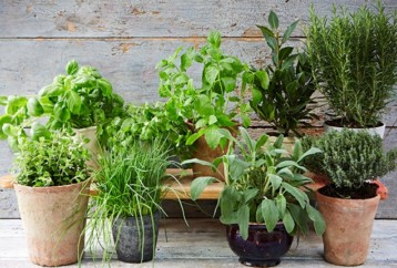 Ευεργετικά βότανα και μυρωδικά