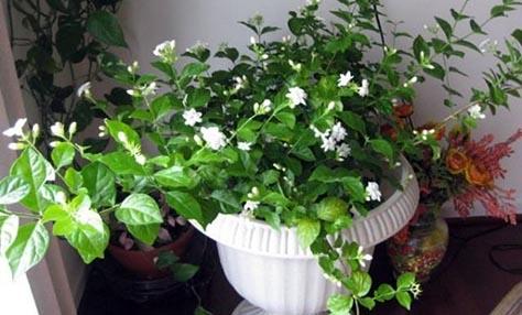 Φυτά εσωτερικού χώρου για έναν ξεκούραστο ύπνο