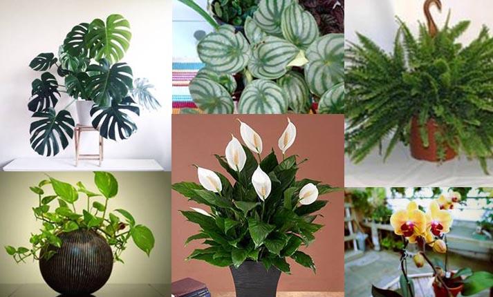 Φυτά εσωτερικού χώρου για τον χειμώνα