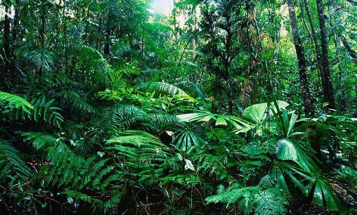 Γιατί αφανίζονται τα τροπικά δάση και με ποιες συνέπειες