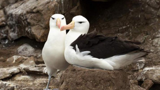 Γιατί κάποια ζώα είναι μονογαμικά και άλλα όχι; Επιστήμονες δίνουν για πρώτη φορά απάντηση