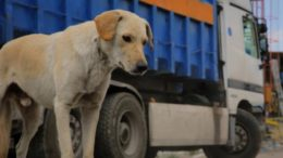 greek_animal_rescue_sto_cinedoc_featured