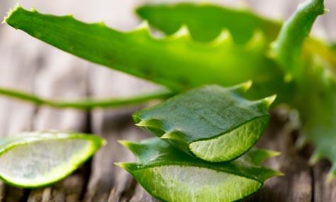 Η ανεκτίμητη χρησιμότητα της aloe vera