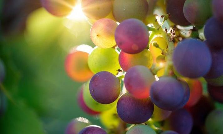 気候変動はワインを脅かす