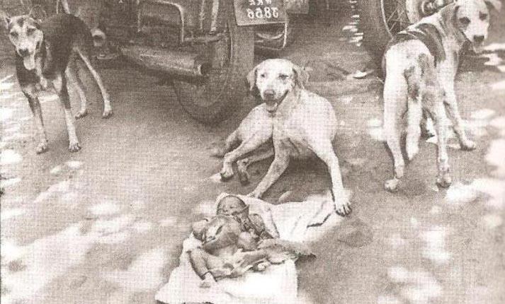 Η κόρη των σκύλων