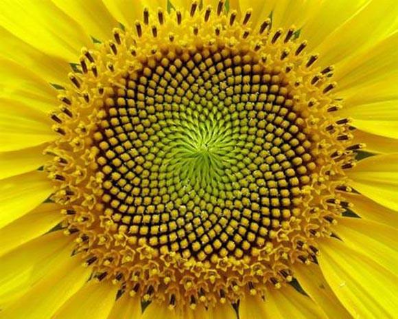 H μαγευτική γεωμετρία της φύσης