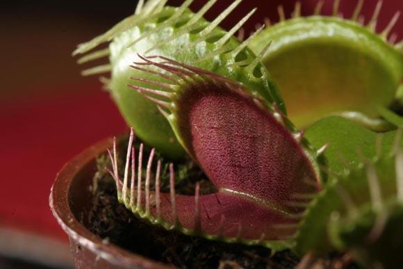 Η παράξενη ομορφιά των σαρκοφάγων φυτών