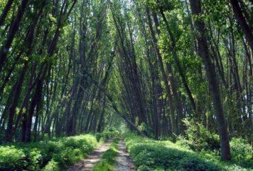 Η τελευταία ζούγκλα της Ευρώπης βρίσκεται στην Ελλάδα