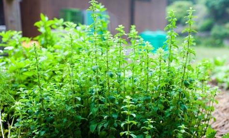 Λαχανικά που μπορούν να αναπτυχθούν χωρίς πολύ ήλιο
