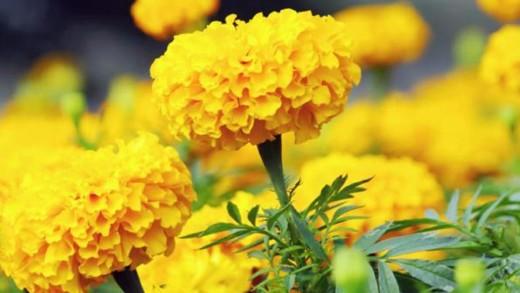 Λουλούδια που θα φυτέψετε το Μάιο