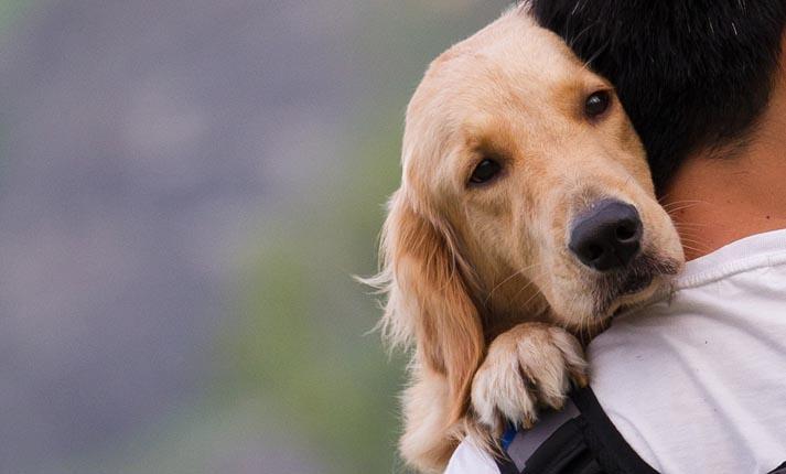 Με ποιον τρόπο σας δείχνουν τα σκυλιά την αγάπη τους