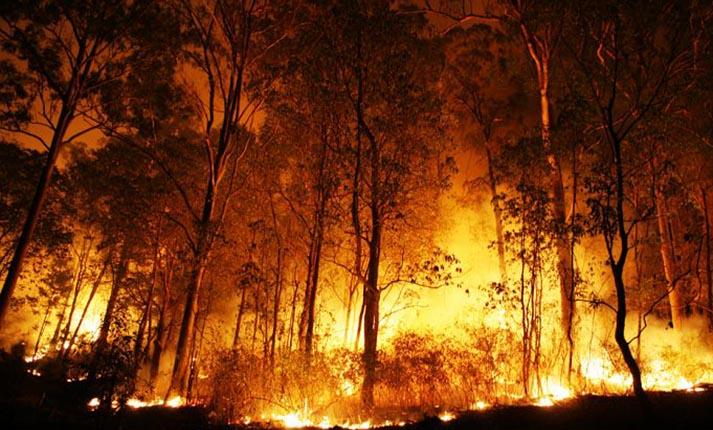 Οδηγίες για την προστασία των δασών από πυρκαγιές