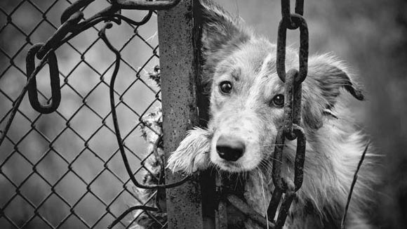 Όποιος είναι βίαιος στα ζώα, θα είναι και στους ανθρώπους