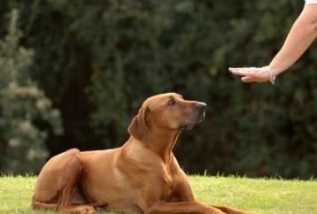 Όσα πρέπει να γνωρίζω για την εκπαίδευση των σκύλων