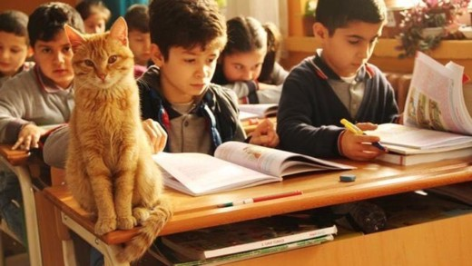 Όταν η τάξη απέκτησε έναν γάτο