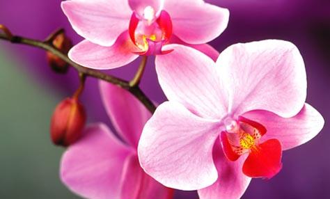 Πώς να φροντίσετε τις ορχιδέες στον κήπο σας