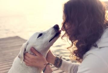Ποτέ μου δε φοβήθηκα τους σκύλους...