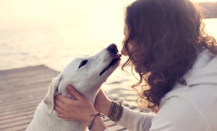 Ποτέ μου δε φοβήθηκα τους σκύλους…