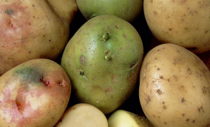 Σολανίνη: Μια δηλητηριώδης ουσία που υπάρχει στις πατάτες