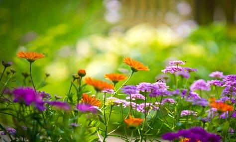 Συμβουλές για έναν ανοιξιάτικο λουλουδένιο κήπο