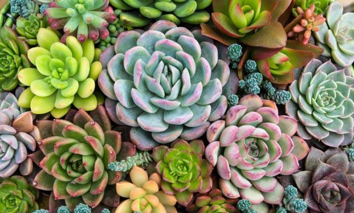Τι φυτά να επιλέξετε για τη βεράντα σας για το χειμώνα;