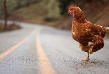 Ζούμε στην «Εποχή του Κοτόπουλου» λένε οι επιστήμονες